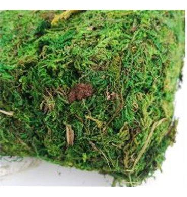 Green moss block