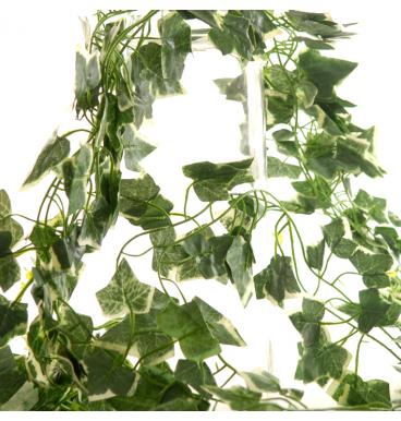 Green varigate ivy string leaves