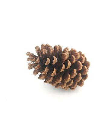 Singular pinecone